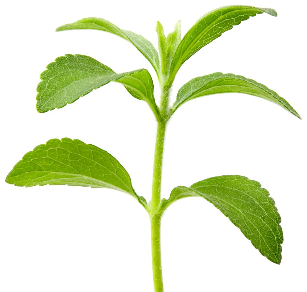 Stevia blad